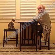 Проблеми със здравето на домашната котка